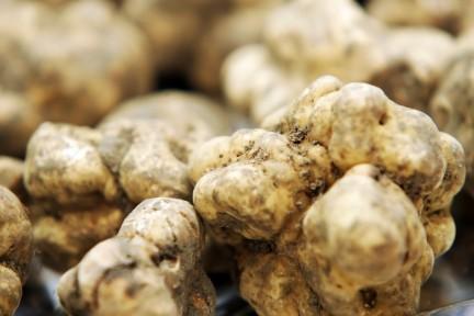 NUVO Magazine: White Truffles