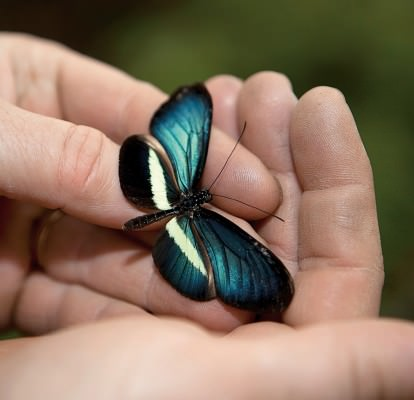 NUVO Magazine: Butterfly World Project