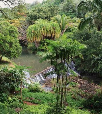 NUVO Magazine: Allerton and McBryde Gardens