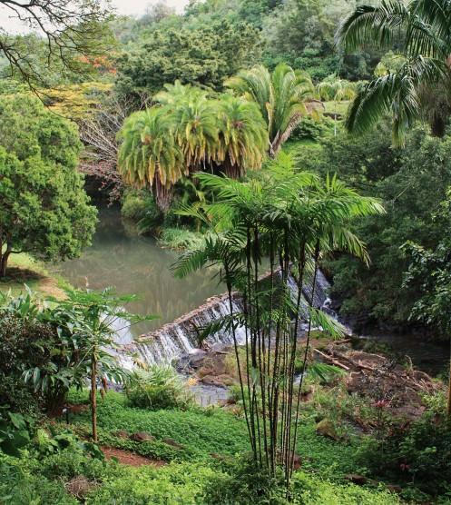 Allerton And McBryde Gardens NUVO