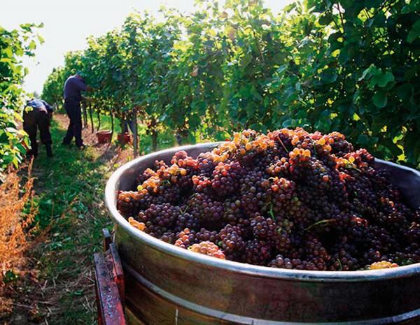 NUVO Magazine: German Pinot Noir