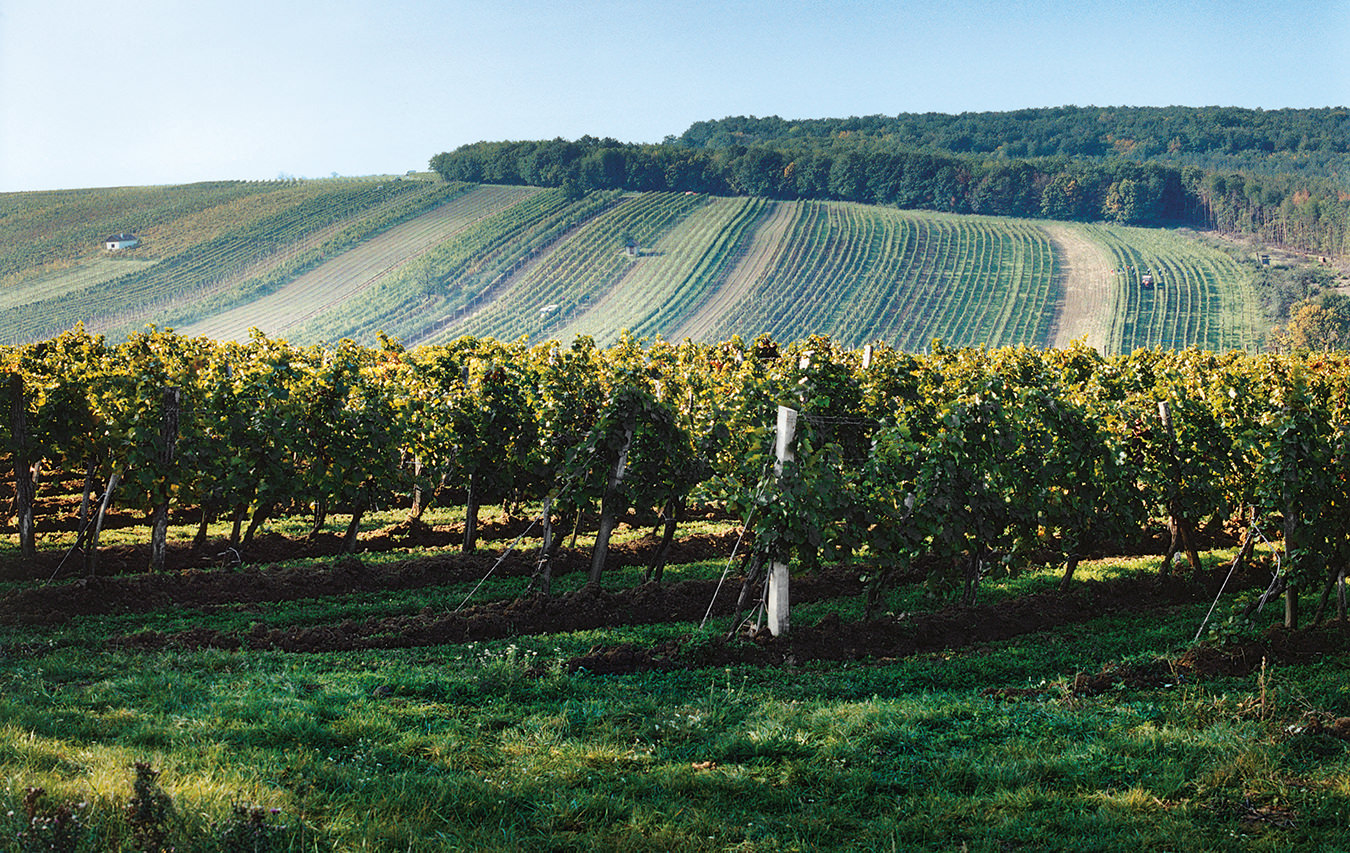 NUVO Magazine: Austrian Wines