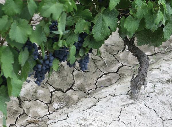 NUVO Magazine: Argentinian Wine