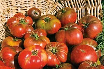 NUVO Magazine: Heirloom Tomatoes