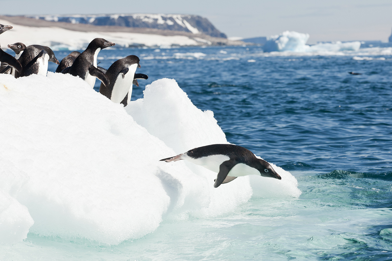 NUVO Web Table of Contents: Quark's Antarctica