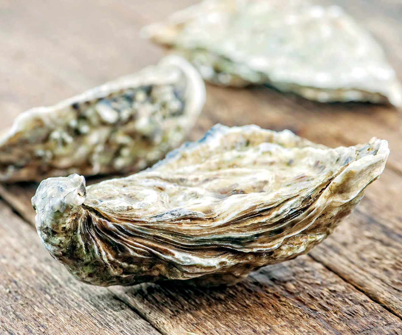 NUVO Magazine: FYI Food, Oysters