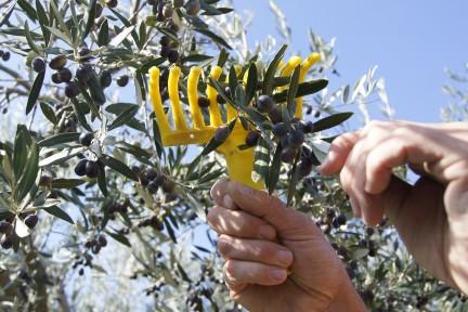 NUVO Daily Edit: Casa Margherita Olive Tree