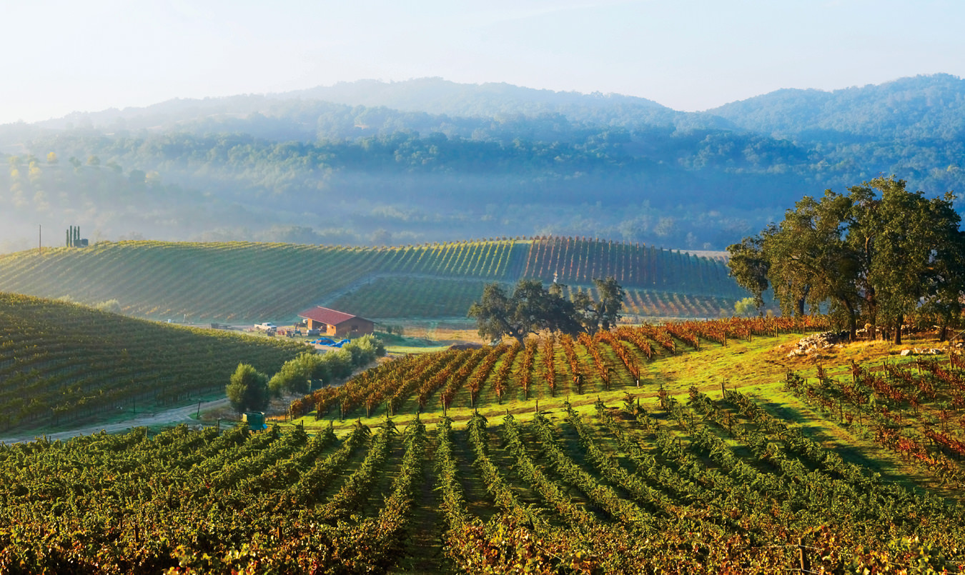 Spring 2016: Rhone on the Rage, Into Wine