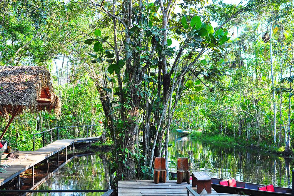 Daily Edit: Sacha Lodge, Ecuador