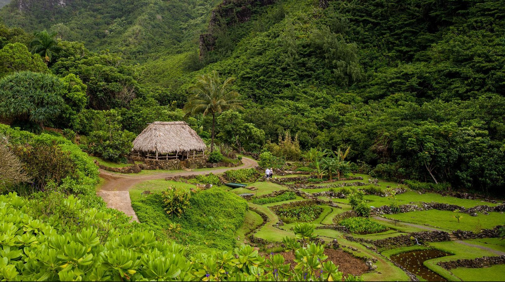 Limahuli Garden And Preserve Nuvo