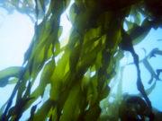 Eat the Seaweed