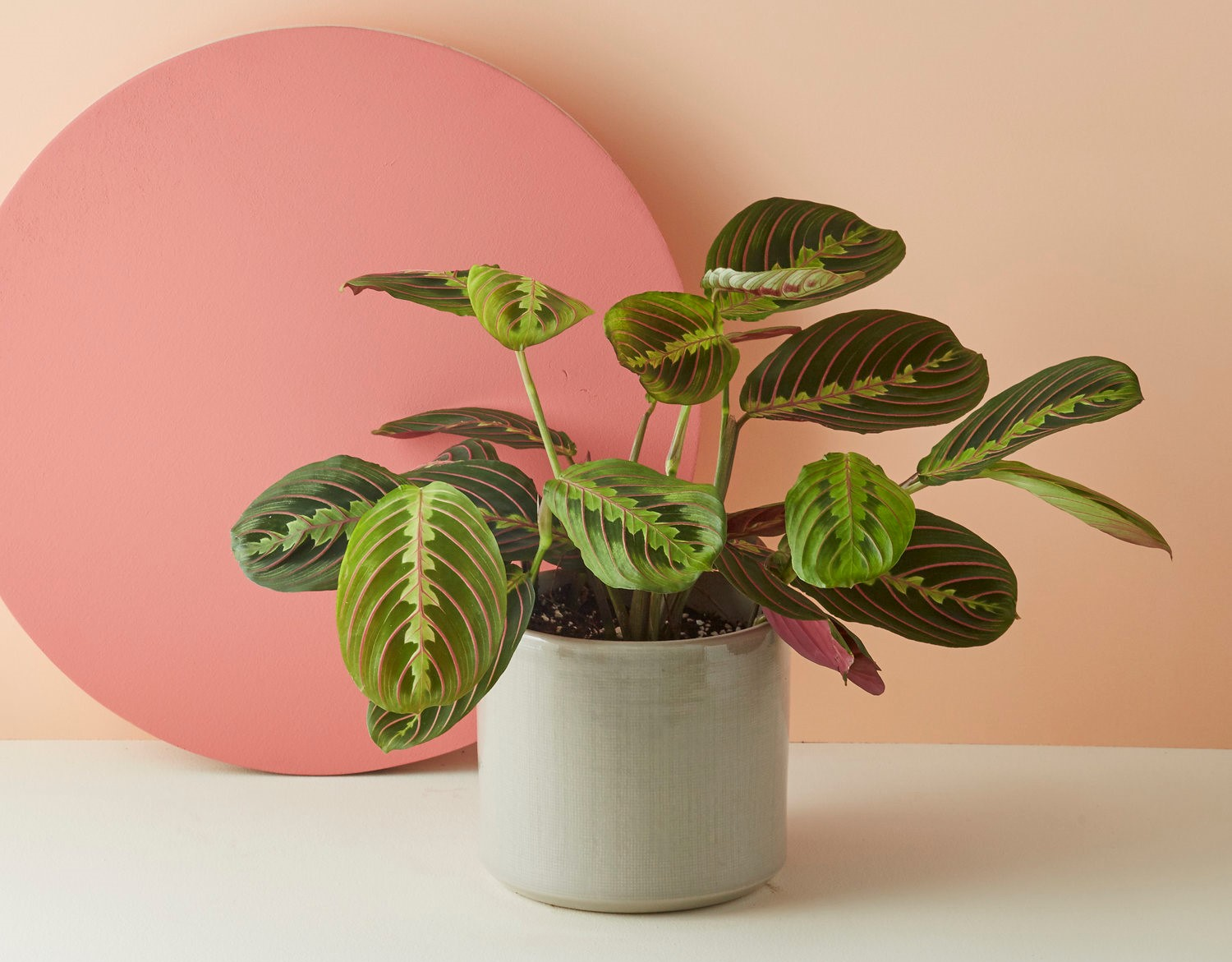 Weird, Wonderful Houseplants