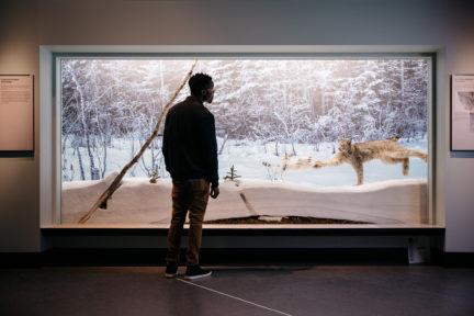 Royal Alberta Museum NUVO