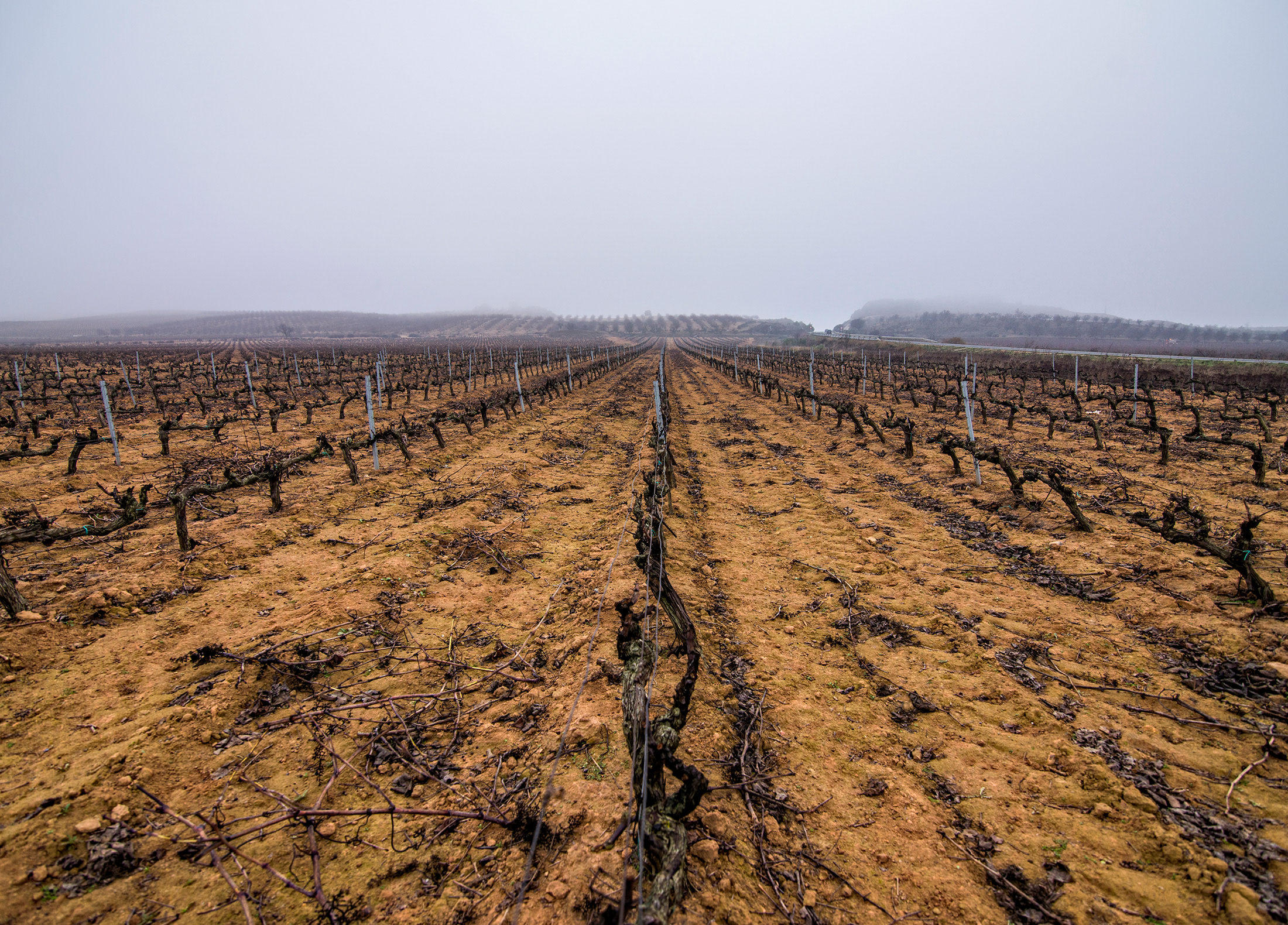 Wine and Climate Change - Into Wine NUVO Spring 2019